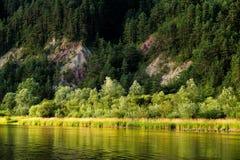 Bos en rotsen die in rivier Dunajec, Slowakije wordt weerspiegeld Stock Foto's