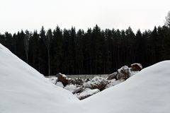 Bos en sneeuw en stenenstapel Stock Afbeelding