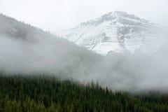 Bos en sneeuwbergen op grote hoogte van Jasper National Park stock afbeelding