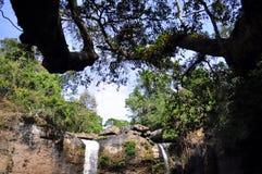Bos en waterval Stock Foto