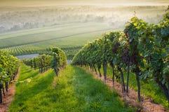 Bos en wijngaard Stock Fotografie