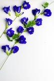 Bos en wijnstok van mooie erwtenbloemen op wit Stock Foto's