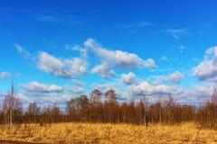 Bos en wolken in de vroege lente Royalty-vrije Stock Foto's