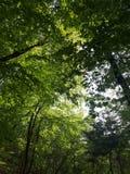 Bos en zon stock afbeeldingen