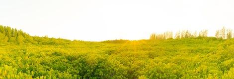 Bos en zonsondergangachtergrond Stock Afbeelding