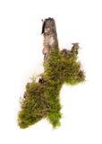 Bos geïsoleerd mos royalty-vrije stock afbeeldingen