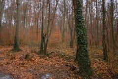 Bos gevallen de bladeren oranje donkere winter royalty-vrije stock foto
