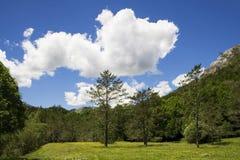 Bos in groen en blauw stock fotografie