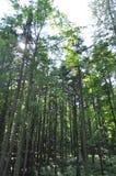 Bos, groene bomen Royalty-vrije Stock Afbeeldingen