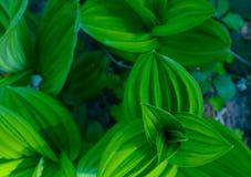 Bos groene kleurrijke bladerenclose-up De foto schildert macromening o af Royalty-vrije Stock Foto's