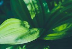 Bos groene kleurrijke bladerenclose-up De foto schildert macromening o af Stock Afbeelding