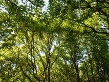 bos bos groene weelderige van de achtergrond boomluifel aardtextuur Stock Foto's