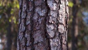 Bos 2 5 het effect van D - bewegende bomen stock videobeelden