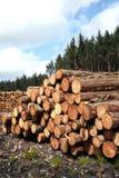 Bos het logboekboomstammen van pijnboombomen Stock Afbeeldingen