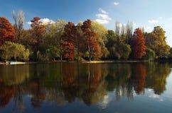 Bos het meerbezinning van de herfst Stock Foto's