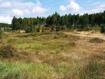 Bos in het midden van de herfsttijd van Rusland Stock Foto