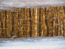 Bos in het water Royalty-vrije Stock Fotografie