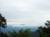 Bos, heuvel en mist Stock Afbeelding