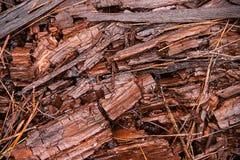 Bos houten spaanders Stock Afbeelding
