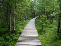Bos houten weg Royalty-vrije Stock Fotografie