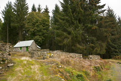 Bos huis Stock Afbeelding