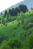 Bos in Karpatische Bergen Stock Fotografie