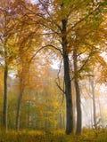 Bos kleuren Royalty-vrije Stock Foto