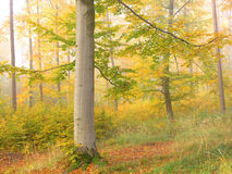 Bos kleuren Stock Fotografie