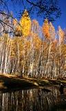 Bos Landschap Royalty-vrije Stock Afbeelding