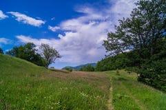 Bos landschap Stock Afbeeldingen