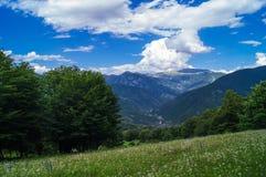 Bos landschap Stock Foto's
