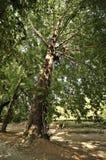 Bos landschap aan het eind van de herfst Stock Foto