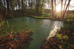 BOS LANDSCHAP MET TURKOOIS WATER EN THE SUN Royalty-vrije Stock Afbeelding