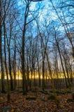 Bos landschap tijdens zonsondergang Royalty-vrije Stock Afbeeldingen