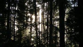 Bos lichte bomen Stock Fotografie