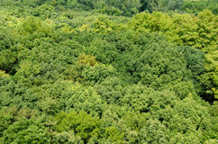 Bos luifel zoals die hierboven wordt gezien van Stock Foto