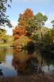 Bos meer in de herfst Stock Fotografie