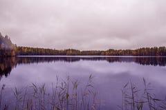 Bos meer in de herfst Trekvogels Royalty-vrije Stock Foto's