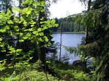 Bos meer in de zomer Royalty-vrije Stock Fotografie