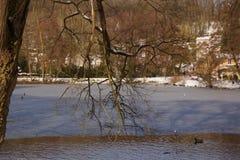 Bos, meer, eenden en sneeuw - Frankrijk Stock Afbeeldingen