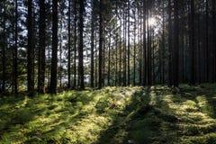 Bos met backlight van de zon die door de takken glanzen Stock Afbeelding
