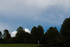 Bos met bewolkt hierboven weer Stock Fotografie