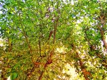 Bos met bomen Royalty-vrije Stock Foto's