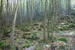 Bos met bomen en mos Royalty-vrije Stock Afbeeldingen