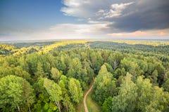 Bos met de lucht dramatische hemel van de wegzonsondergang Royalty-vrije Stock Afbeeldingen