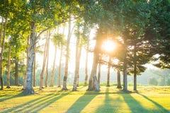 Bos met de zon Royalty-vrije Stock Afbeelding