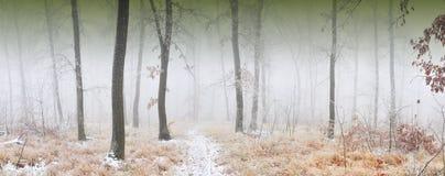 Bos met glansijs dat wordt behandeld stock foto's