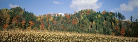 Bos met graangebied in de herfst Stock Foto's