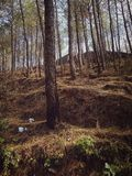 Bos met grote bomen stock fotografie