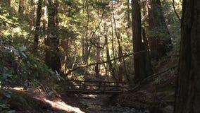 Bos met houten brug stock videobeelden